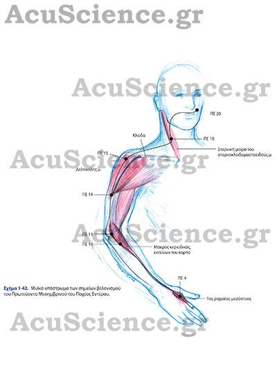 Acuscience.gr Μυικό Υπόστρωμα