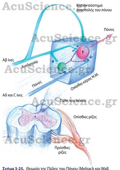 Θεωρία της Πύλης του Πόνου Acuscience.gr