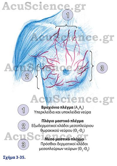 Acuscience.gr Πλέγματα Βελονισμού