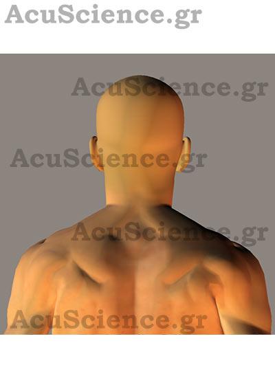 Acuscience.gr Σημεία Σώματος Βελονισμός