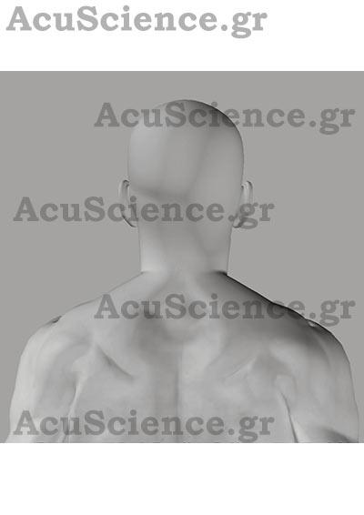 Σημεία Σώματος Βελονισμού Acuscience.gr