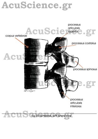 Acuscience.gr processus