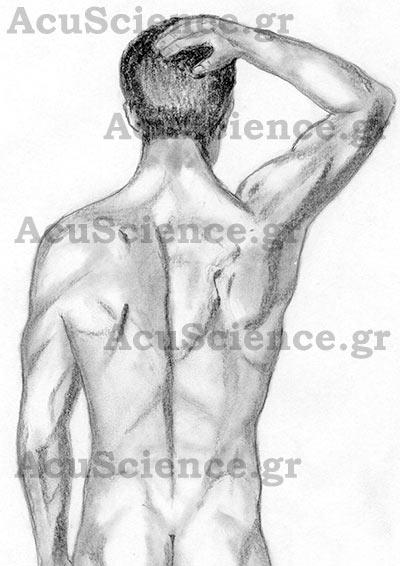 ACU SCIENCE Βελονισμός Πλάτη Άντρας